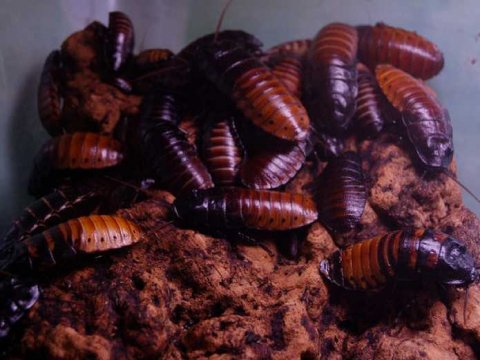 1.5 Million Cockroaches Escape Dafeng Facility in China